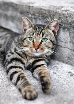 Pręgowany kot z zielonymi oczami śpi na schodach