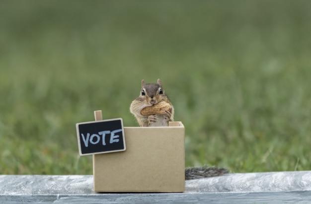 Pręgowce ogólne wybory na stoisku głosowania