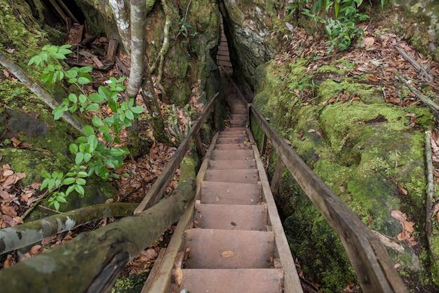 Presidente figueiredo, amazonas, brazylia - 23 sierpnia 2016: schody pośród lasów deszczowych amazonii