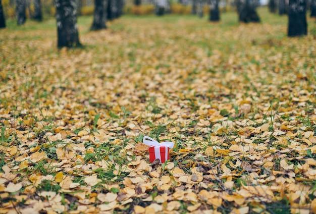Prezenta pudełko w jesień spadać liściach na ziemi w parku