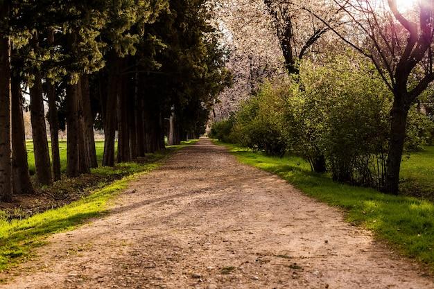Princes gardens w pałacu aranjuez to romantyczne miejsce turystyczne, hiszpańska rezydencja królewska sommer w madrycie