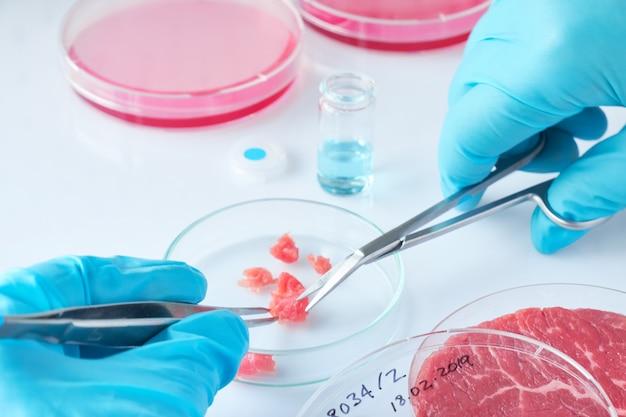 Próbka mięsa w otwartym jednorazowym plastikowym naczyniu do hodowli komórkowej w nowoczesnym laboratorium lub zakładzie produkcyjnym