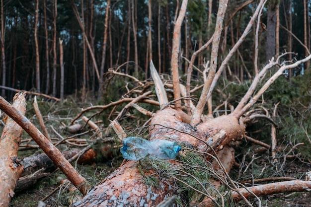 Problemy ekologiczne plastikowa butelka w pniu zwalonego drzewa sosnowego gratka w sosnowym lesie