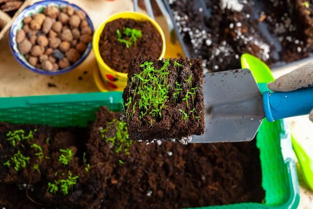 Proces przesadzania roślin z bliska akcesoria ogrodnicze