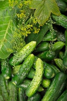 Produkty ekologiczne, zdrowa żywność, zbiory do wykorzystania w przyszłości, marynowanie warzyw, kiszenie ogórków