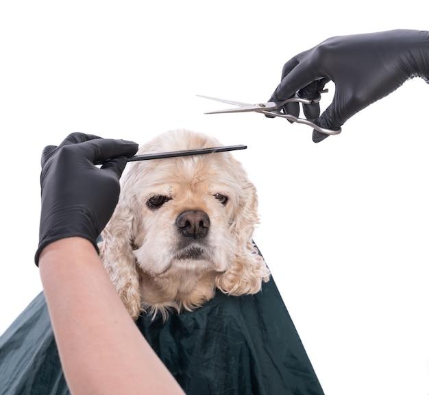 Profesjonalna opieka nad psem. groomer trzymając narzędzia w rękach