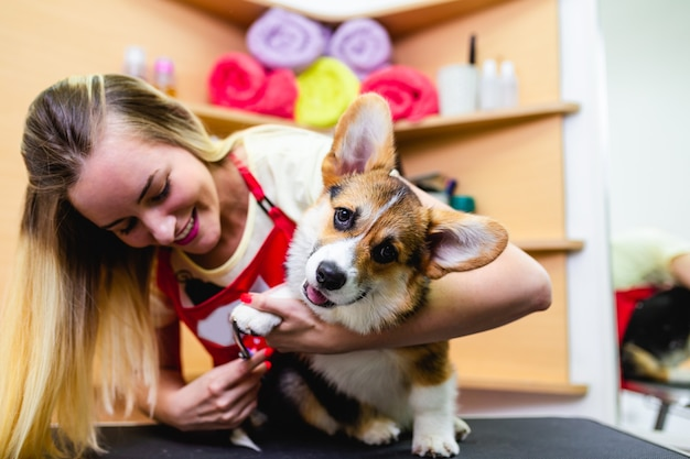 Profesjonalny groomer obcinający psie paznokcie.