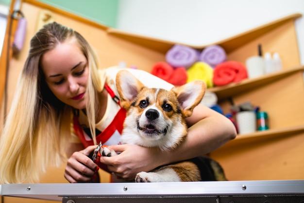 Profesjonalny groomer obcinający psie paznokcie