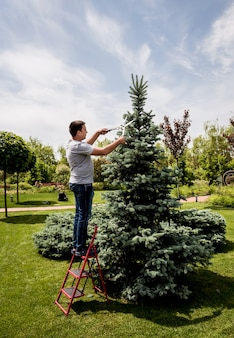 Profesjonalny ogrodnik przycinający drzewo nożyczkami ogrodowymi. projektowanie krajobrazu. prace ogrodowe