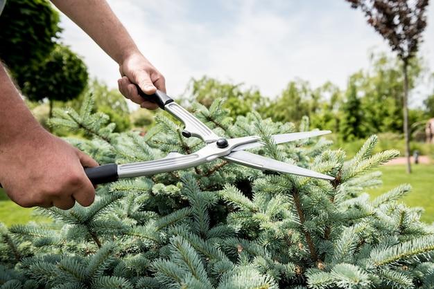 Profesjonalny ogrodnik przycinający drzewo nożyczkami ogrodowymi