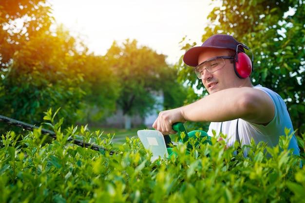 Profesjonalny ogrodnik przycinający żywopłot na podwórku
