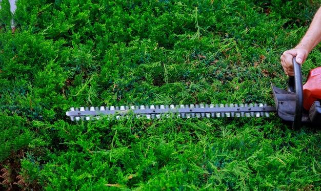 Profesjonalny ogrodnik ubrany bezpiecznie z żywopłotem za pomocą trymera