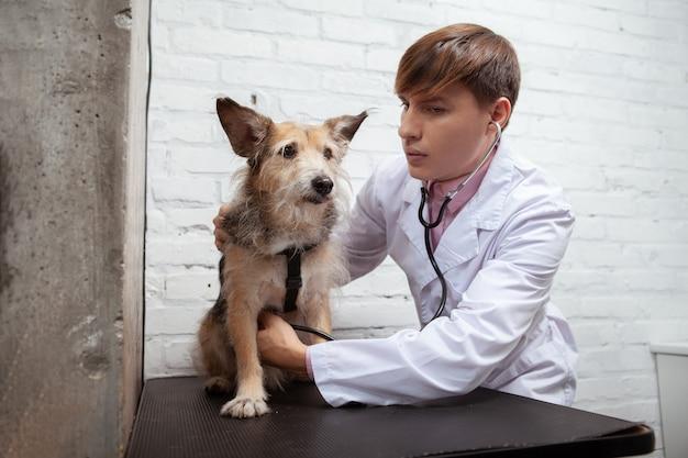 Profesjonalny weterynarz za pomocą stetoskopu bada uroczego puszystego psa rasy mieszanej w swojej klinice