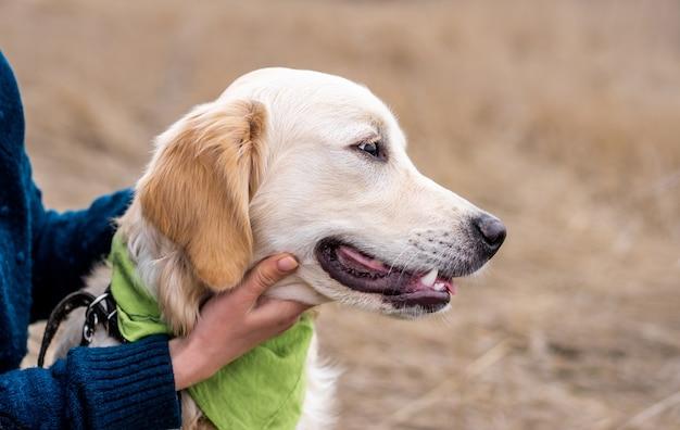Profil głowy psów na tle przyrody