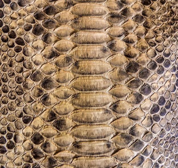 Projekt tekstury skóry węża brązowy