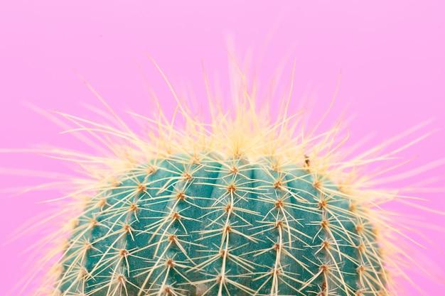 Projektowanie mody cactus
