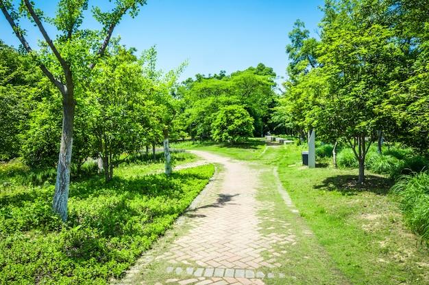 Promenada w pięknym parku miejskim