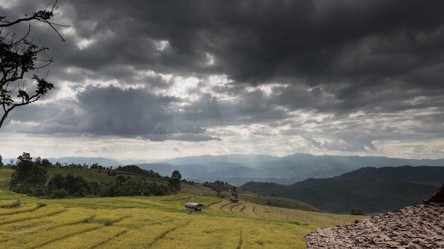 Promień słońca na żółtym tarasowym polu ryżowym