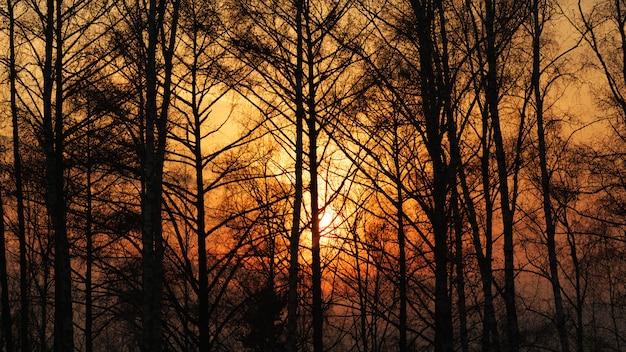 Promienie słońca przez mgłę i drzewa o zachodzie słońca