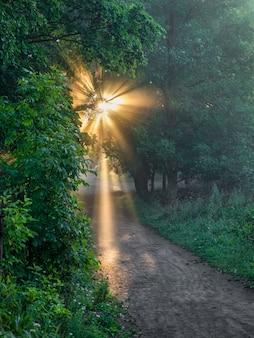 Promienie słońca wpadają przez liście nad alejką w parku.