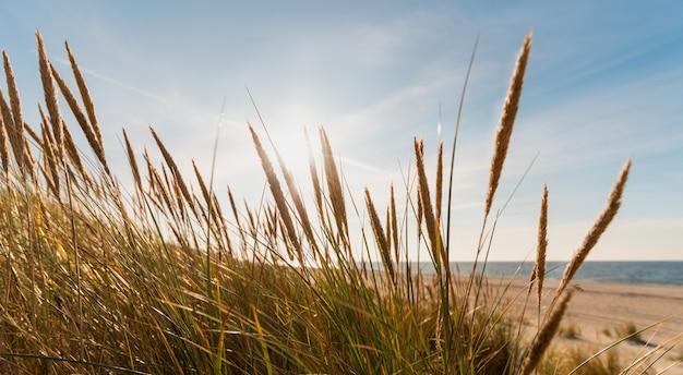Promienie słoneczne omiatają wydmy na morzu bałtyckim o zachodzie słońca.