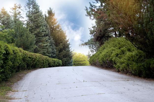 Promienie słoneczne oświetlają zieloną trawę i drzewa