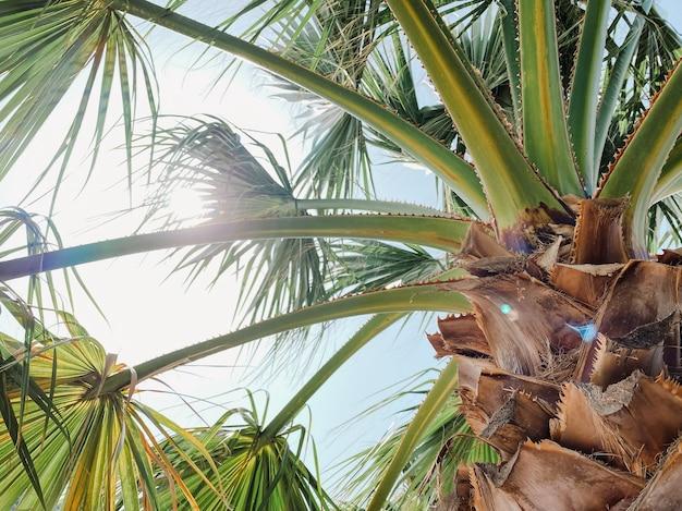 Promienie słoneczne przedzierają się przez gałęzie palmy. pojęcie rekreacji i turystyki. fotografia podróżnicza.