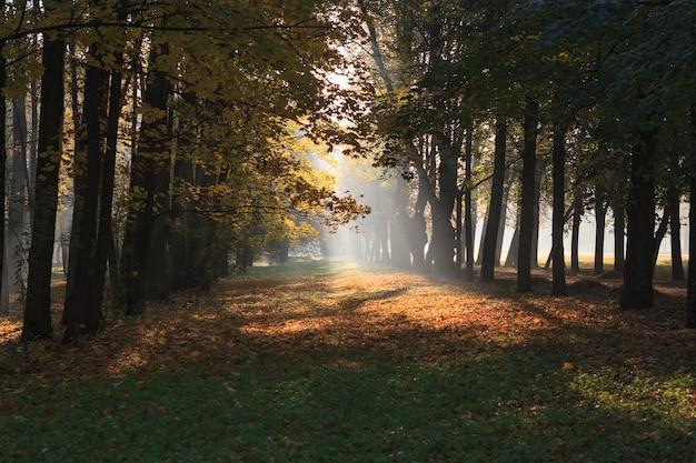 Promienie słoneczne rozjaśniają jesienne liście w zamglonej alei parku w carskim siole