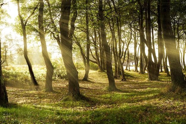 Promienie słoneczne wpadają przez liście wysokich drzew