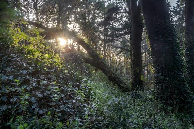 Promienie słoneczne wpadające do zielonego lasu.