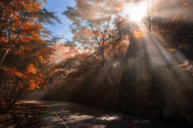 Promienie światła słonecznego przez ulicę i las z jesiennym kolorem liści w sezonie jesiennym. naturalne tło i malowniczy cel podróży.