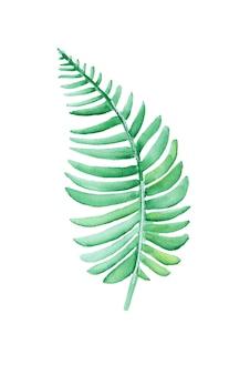 Prosta akwarela zielona paproć
