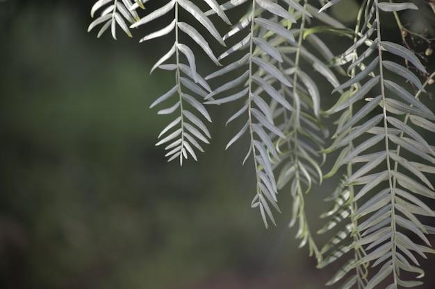 Proste i eleganckie naturalne tło zen z liśćmi drzew i przestrzenią do kopiowania