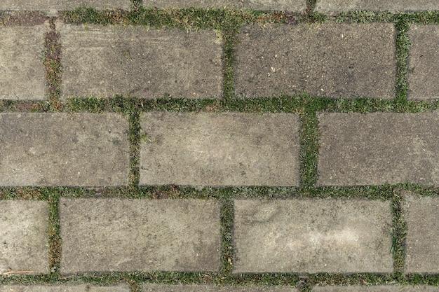 Prostokątne płyty chodnikowe o fakturze porośniętego mchu