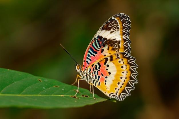 Prosty tygrysi motyl na zielonych liściach