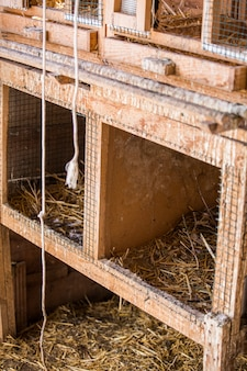 Przechowywanie haystacks w gospodarstwie hayloft