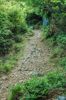 Przed krajobrazem leśnym szlaki krajobrazowe malownicze