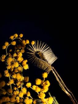 Przedłużanie rzęs w kolorze złotym, żółte pęsety na tle czerni i mimozy.