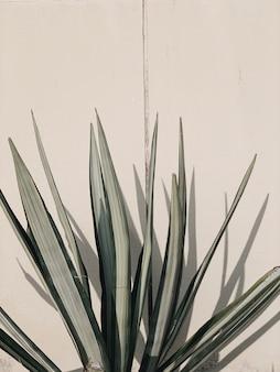 Przedni widok. kwiatowy wzór z bladozielonymi liśćmi palmowymi na beżowej ścianie