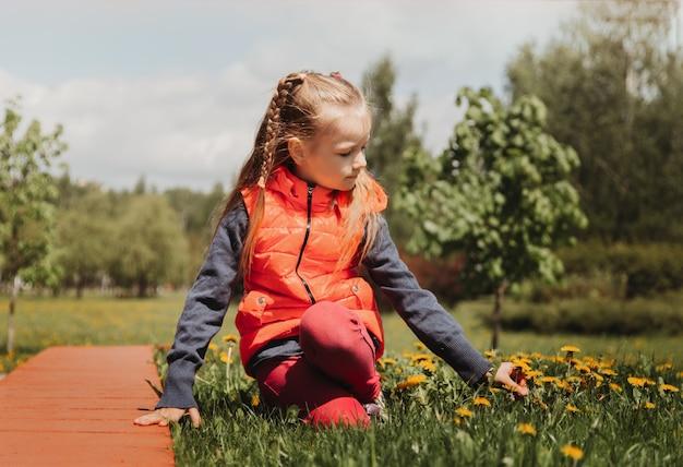 Przedszkole dziewczyna zbiera kwiaty mniszka lekarskiego w parku latem. dziecko zbiera bukiet
