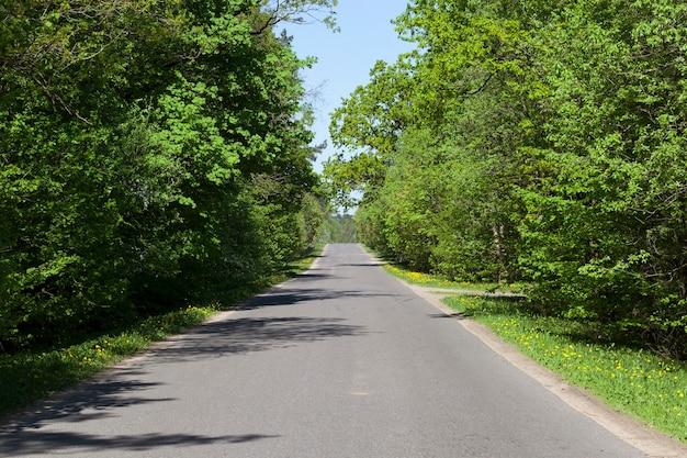 Przejeżdżanie leśną drogą asfaltową, wiosenny krajobraz przy słonecznej pogodzie, w jezdni rosną drzewa liściaste