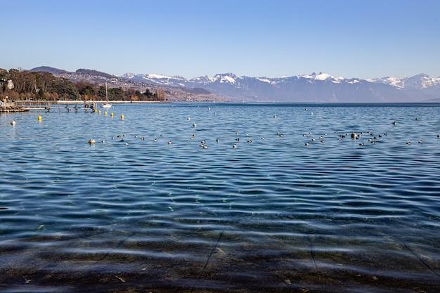 Przejrzyste wody jeziora genewskiego i alp widziane z lozanny w szwajcarii
