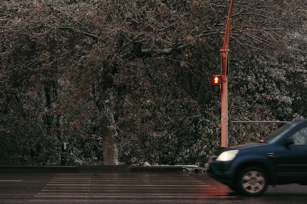 Przejście dla pieszych na światłach ze znakiem stop. czerwony znak sygnalizacji świetlnej. mokry asfalt, ruch maszyny.