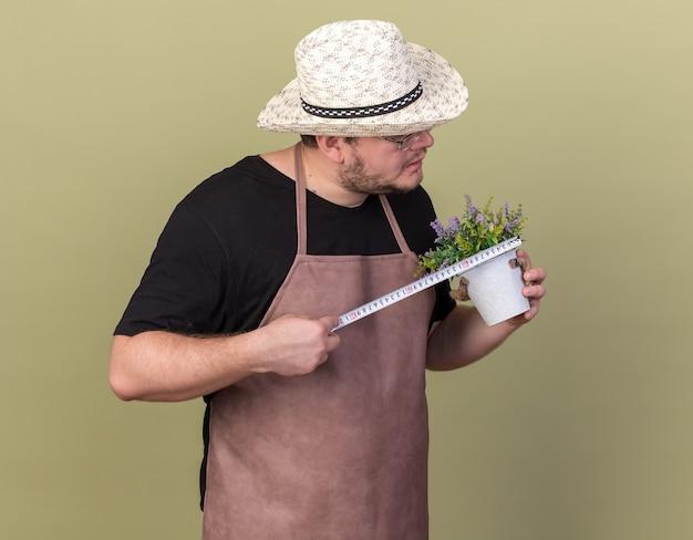 Przekonany, młody mężczyzna ogrodnik w kapeluszu ogrodnictwo pomiaru kwiat w doniczce z centymetrem na białym tle na oliwkowej ścianie