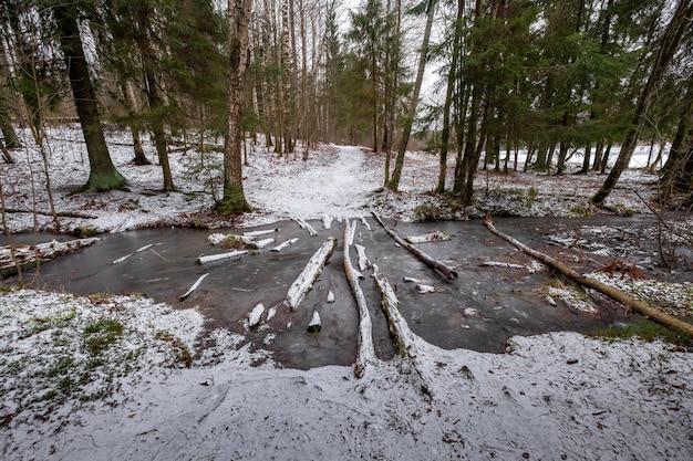 Przekraczanie kłód przez leśny strumień w zimowym lesie