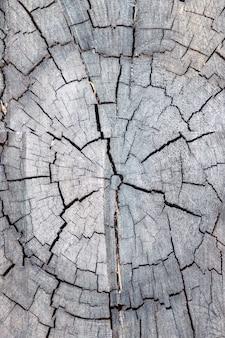 Przekrój drzewa z bliska pęknięcia. drewno tekstura tło. zdjęcie pionowe