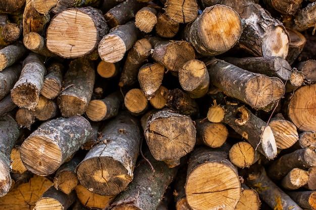 Przekrój drzewa.