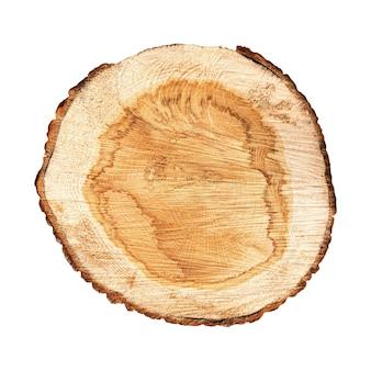 Przekrój pnia drzewa na białym tle