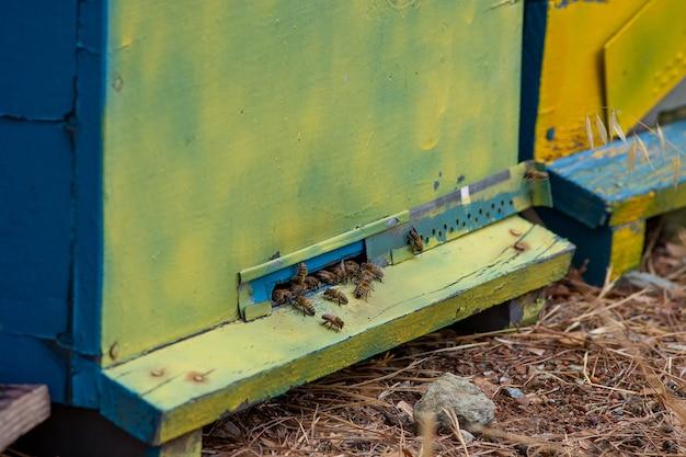 Przenośne ule na wystawie w lesie z bliska. pszczoły przed wejściem do ula.