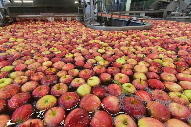Przenośnik taśmowy z jabłkami w wodzie